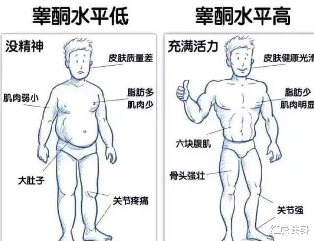 为何许多常常停止大重量健身的肌肉男,反而睾酮素程度低?