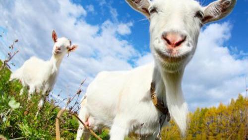 """羊奶粉比牛奶粉更有营养?宝妈选奶粉要""""擦亮眼"""",附选奶粉攻略"""