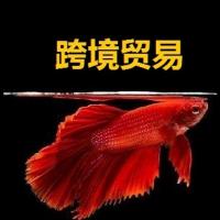 跨境贸易鱼