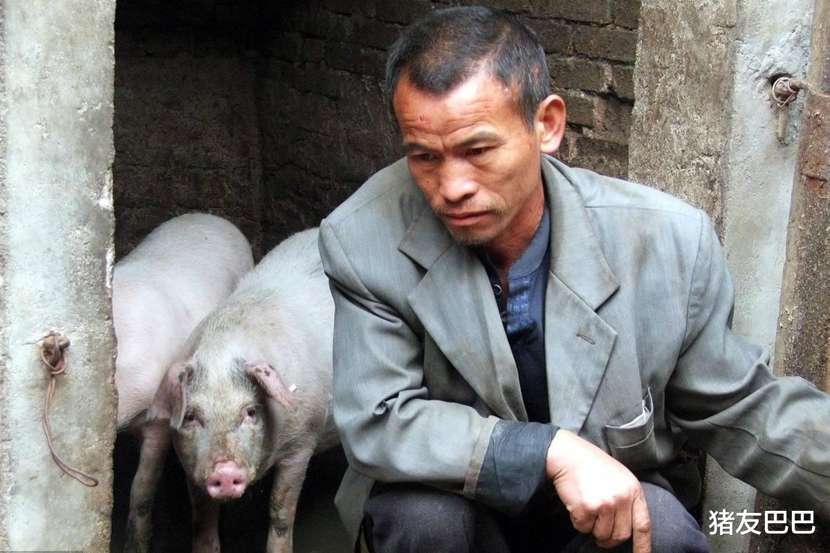 恶化!8月4日猪价跳水,行情跌满格,强抑行情下挫,1个坏消息!