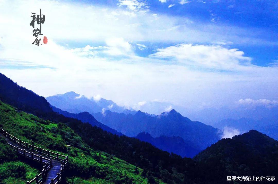 美国黄石公园片面开放!为何中国神农架深处不被许可前去?