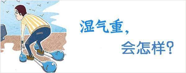 湿气重每天只需喝杯茶,轻松排出体内十年湿气,健康又漂亮!