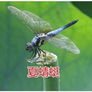 夏蜻蜓教育工作室