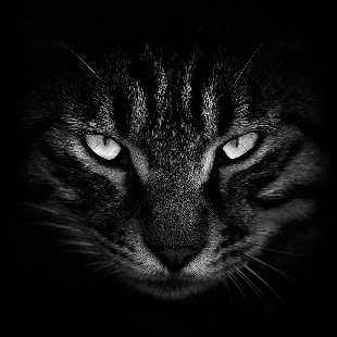 龙猫眼镜频道