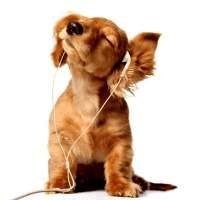 音乐in现场