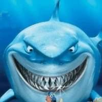 大鲨鱼来了