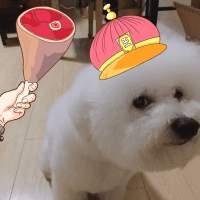 牛炮Dog