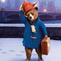 棕熊动物世界