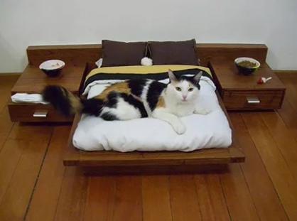 活的还不如一只猫呢!