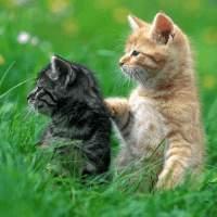 一起晒太阳的小懒猫
