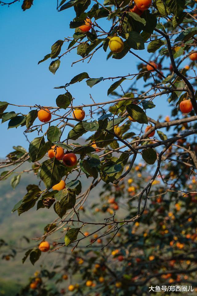 免费、徒步、爬山、喝烘柿、荥阳与