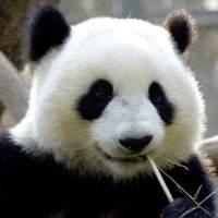 Panda伟聊电影
