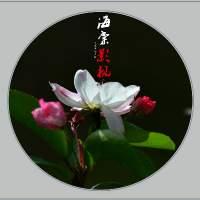 海棠花影视