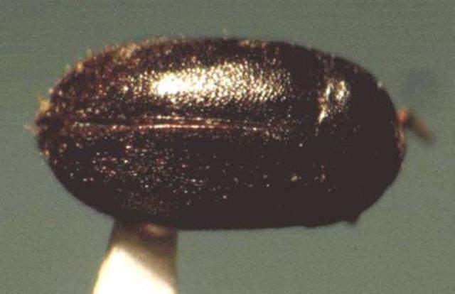 马王堆汉墓出土一只小虫子,瞬间引起考古界一片争论
