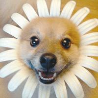 翠花逗笑娱乐