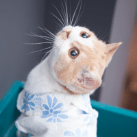 奥迪是只猫