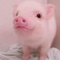 跟猪猪呀说娱乐