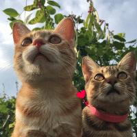 桔桔的茶园小动物
