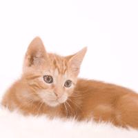 小猫咪影视
