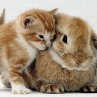 萌猫爱兔兔