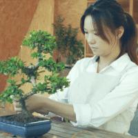 祖来说bonsai