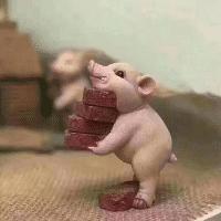 猪猪侃娱乐