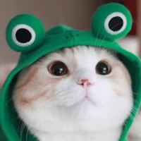 青蛙呱呱看电影