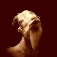 老羊mp4
