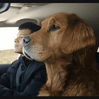 小迟和流浪狗的故事