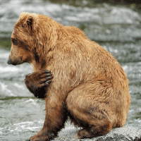 小笨熊的兴趣课堂