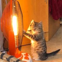 是只招财猫