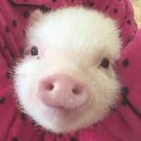 猪猪彩色玩具乐园