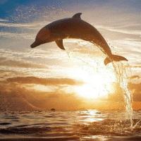 海豚影视基地