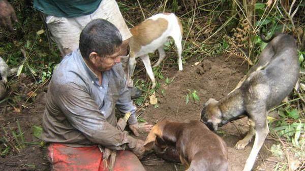 農夫在野外地面拼命挖掘讓人好奇,結果發現的生物讓不淡定了