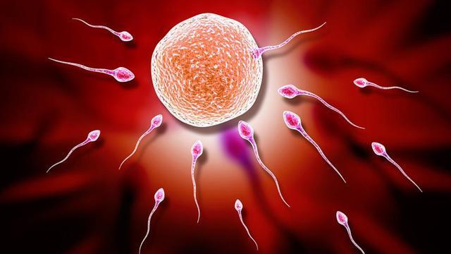 """最新研究发现:女性卵子所""""中意""""的对象,不一定是自己的丈夫"""