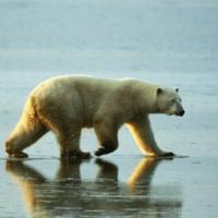 北极熊娱乐