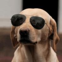 香香家的蠢狗