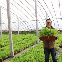 寿光蔬菜种植培训
