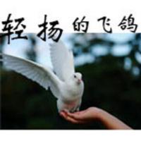 轻扬的飞鸽