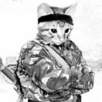 峡谷有猫兵