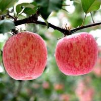 西安苹果哥