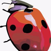 甲壳虫解说