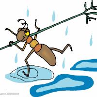 腰痛的蚂蚁
