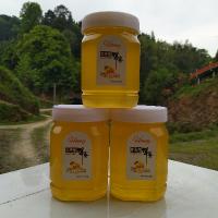 小白养蜂记