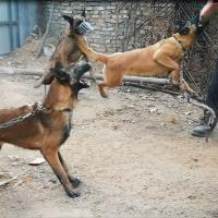 张东拍宠物