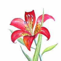 小梁讲花卉