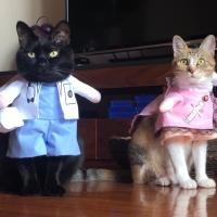 萌宠猫模警长和狐狸