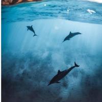 小海豚影视