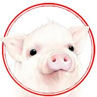 猪耳朵学电影