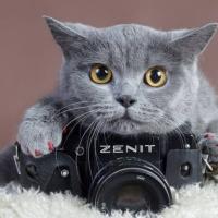 猫猫聊娱乐